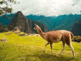 Las mejores zonas donde alojarse cerca de Machu Picchu, Perú
