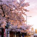 Las mejores zonas donde alojarse en Invercargill, NZ